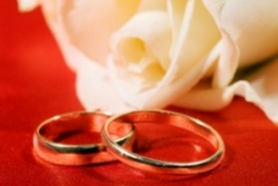 On a photo a rose and wedding rings